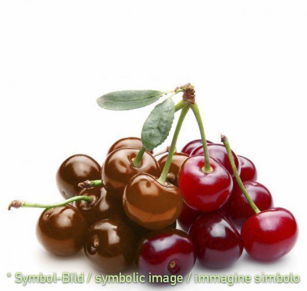 chocolate - cherry / cheri cioccolato ciliegia - tin 6 kg - Classic ice cream paste ** BY RESERVATION ONLY!!!