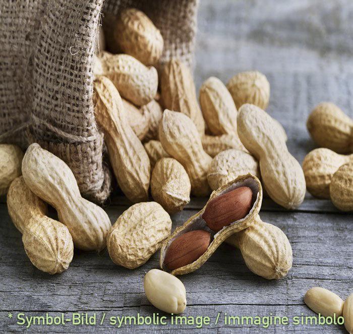 Erdnuss / arachide - Dose 5,5 kg - Klassische Eispasten Milcheispasten