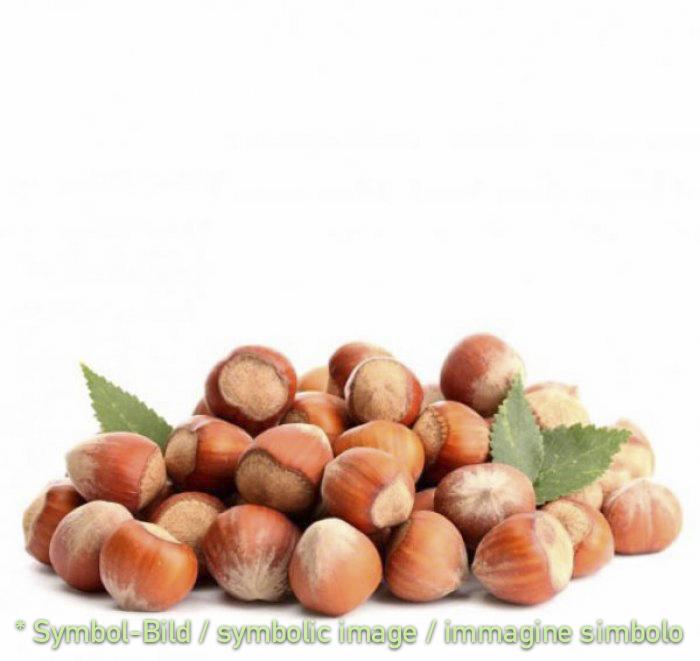 Haselnuss grob / nocciola con granella fine - Dose 12 kg - Klassische Eispasten