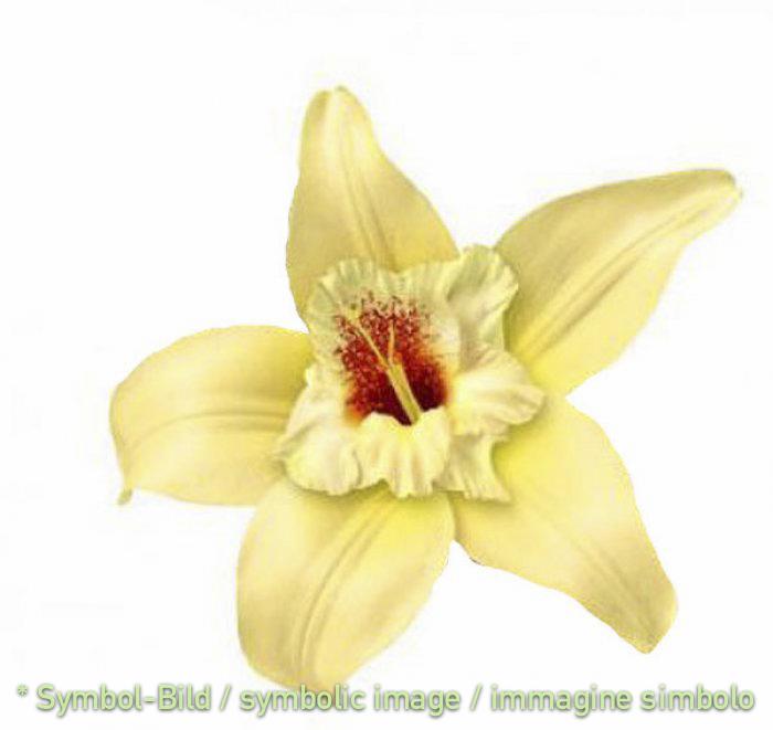 vanilla 2010 / vaniglia 2010 - tin 6,5 kg - Classic paste