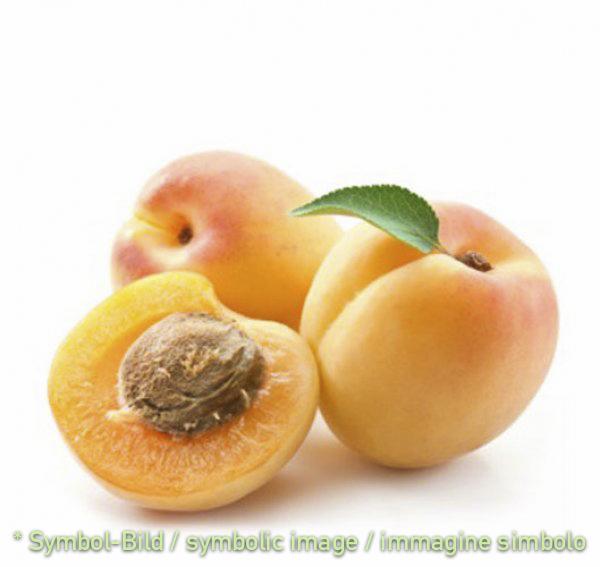 Aprikose / albicocca - Dose 3,25 kg - Frucht Eispasten