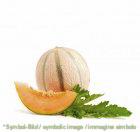 Melone - Dose 3,25 kg - Frucht Eispasten