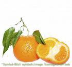 Mandarine / mandarino - Dose 3,25 kg - Super Top Marmorierer ** NUR AUF VORBESTELLUNG!!!