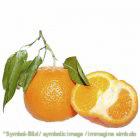 Pronto Mandarine / pronto mandarino - Beutel 1,35 kg ** NUR AUF VORBESTELLUNG!!!